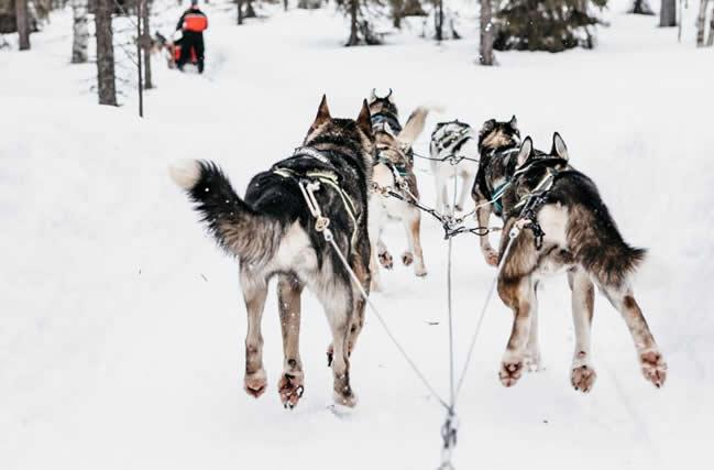 Safari en trineos de huskies