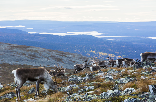 Renos Laponia