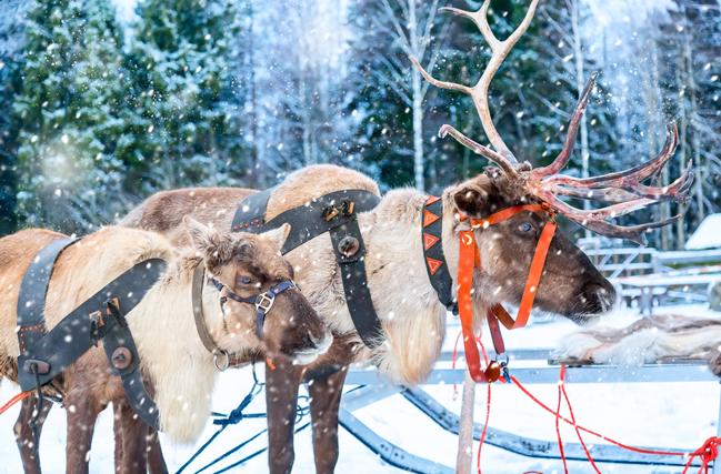 Renos, Laponia