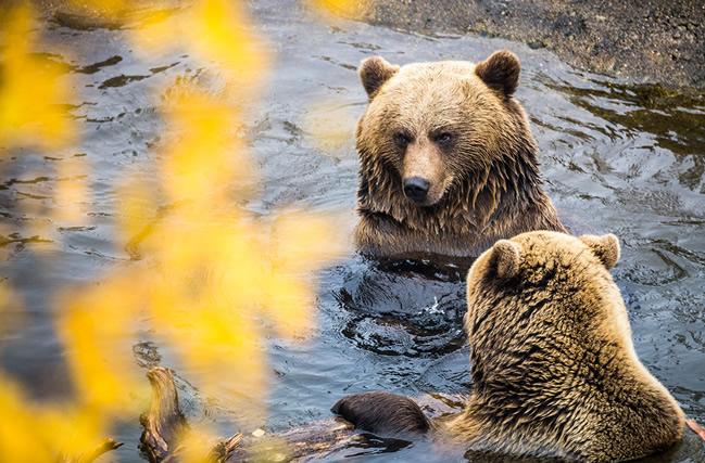 Zoo Ártico de Ranua